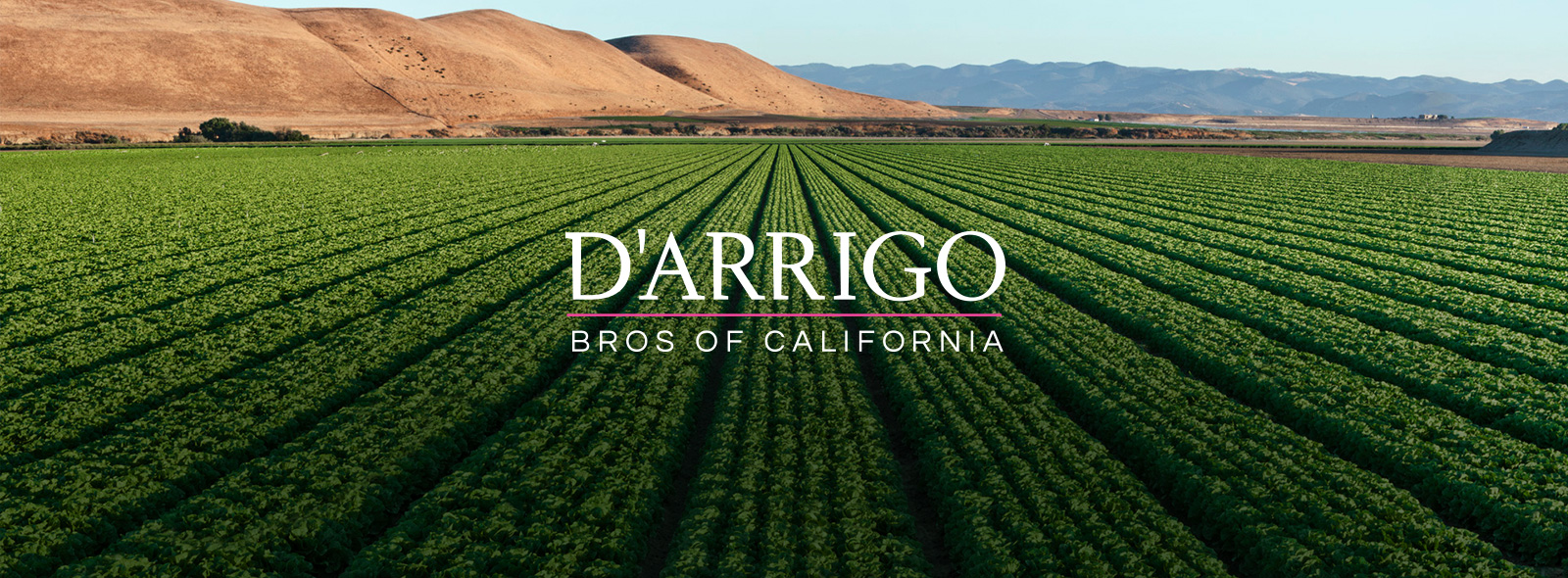 D'Arrigo Bros Logo over Crop Rows