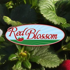 Red Blossom Logo Website Header