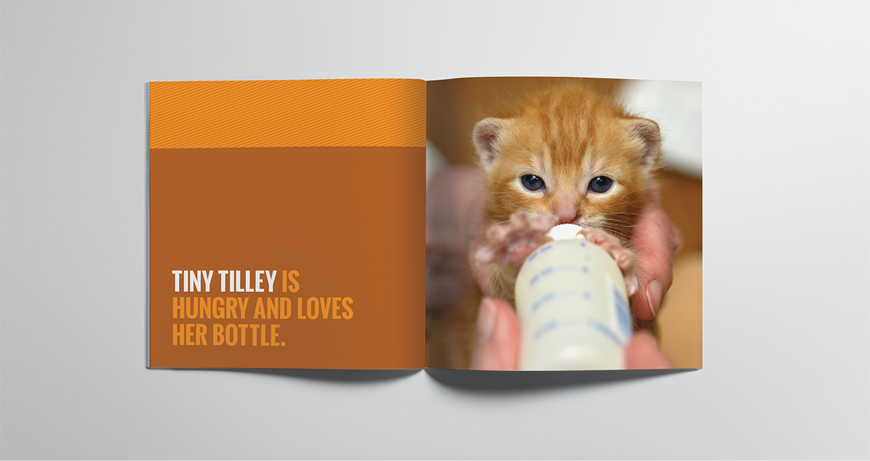 SF Animal Care and Control Brochure Spread with Kitten