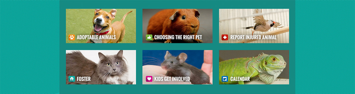 SF Animal Care and Control Website Categories