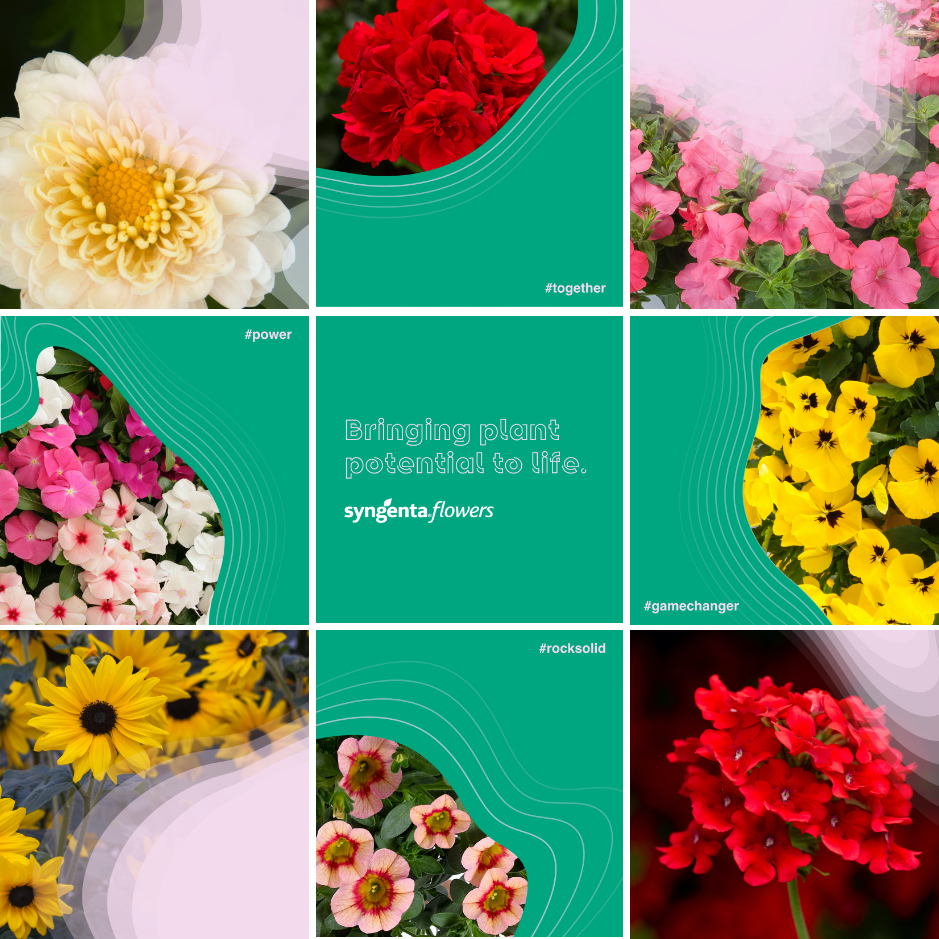 3 by 3 grid showing square social media posts promoting Syngenta Flowers' new brand
