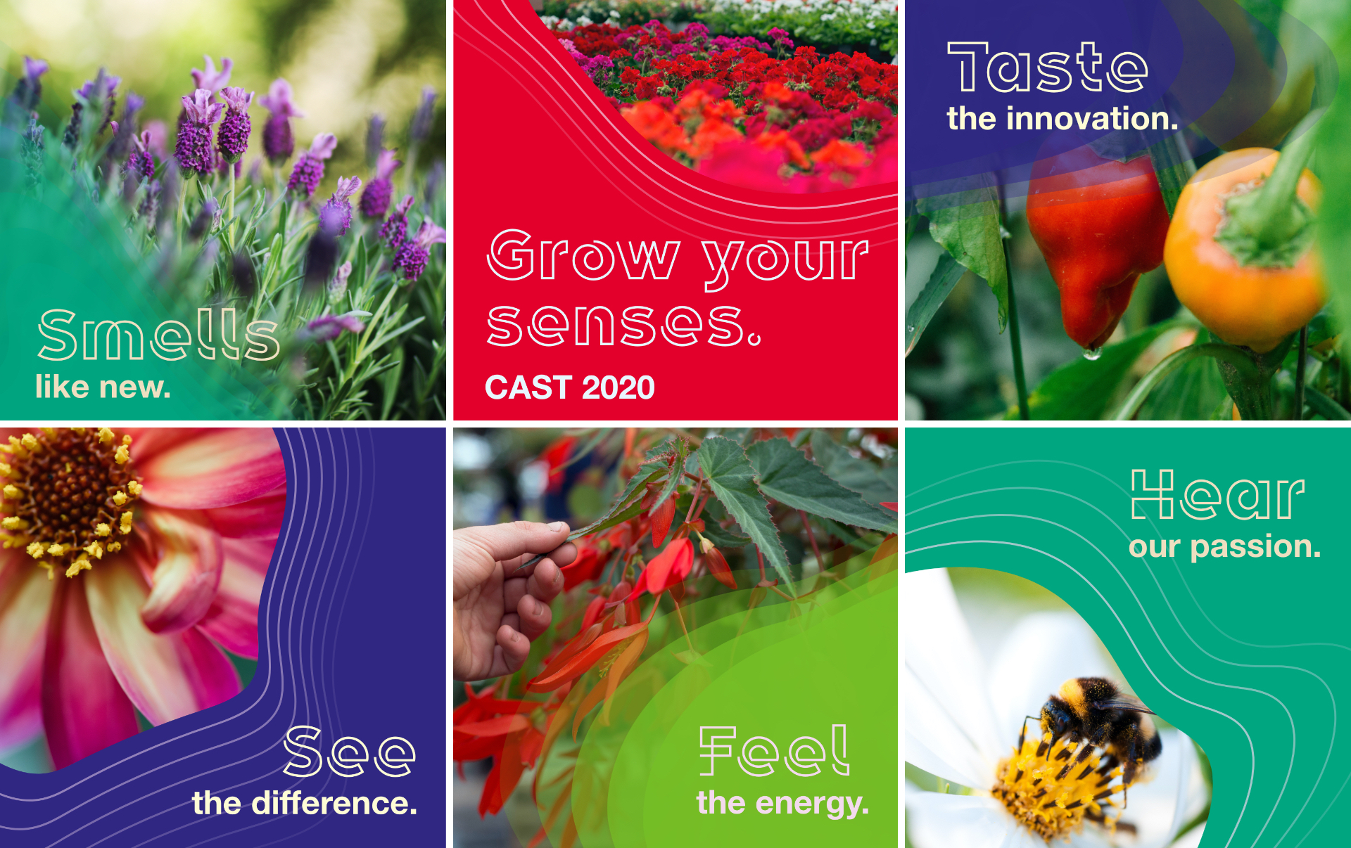 3 by 2 grid of square instagram posts promoting Syngenta Flowers 2020 Webcast