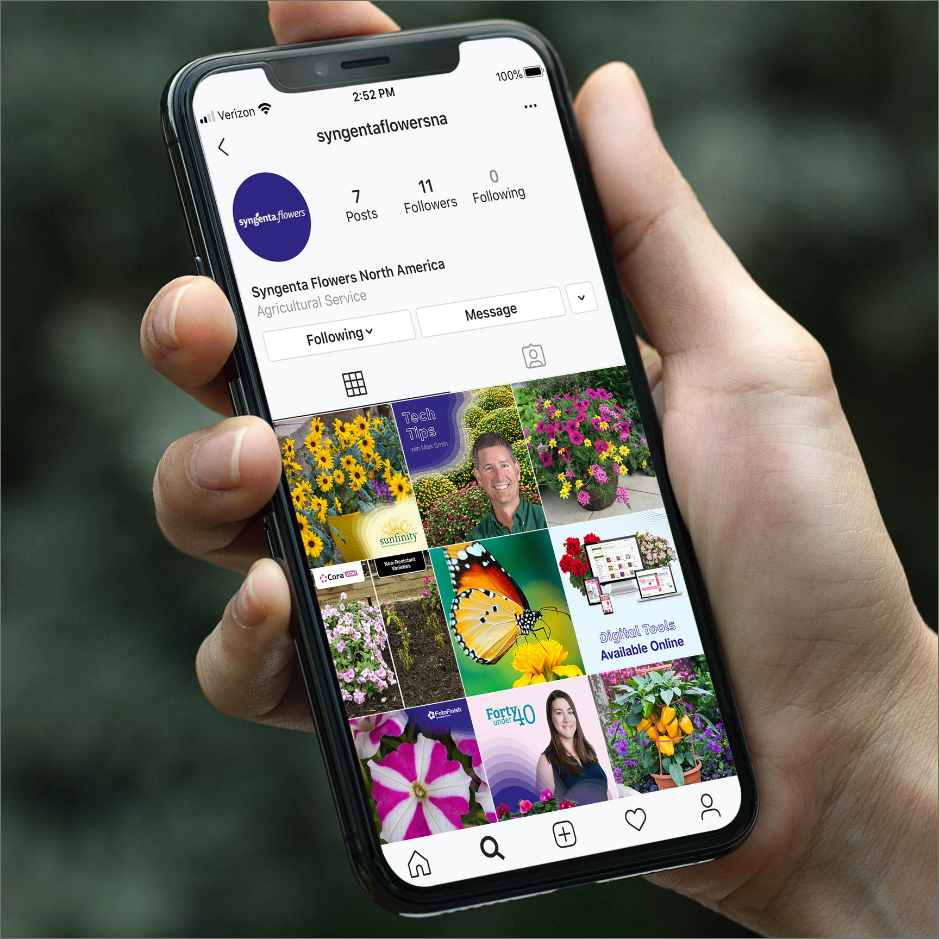 Smartphone showing Syngenta Flowers instagram profile