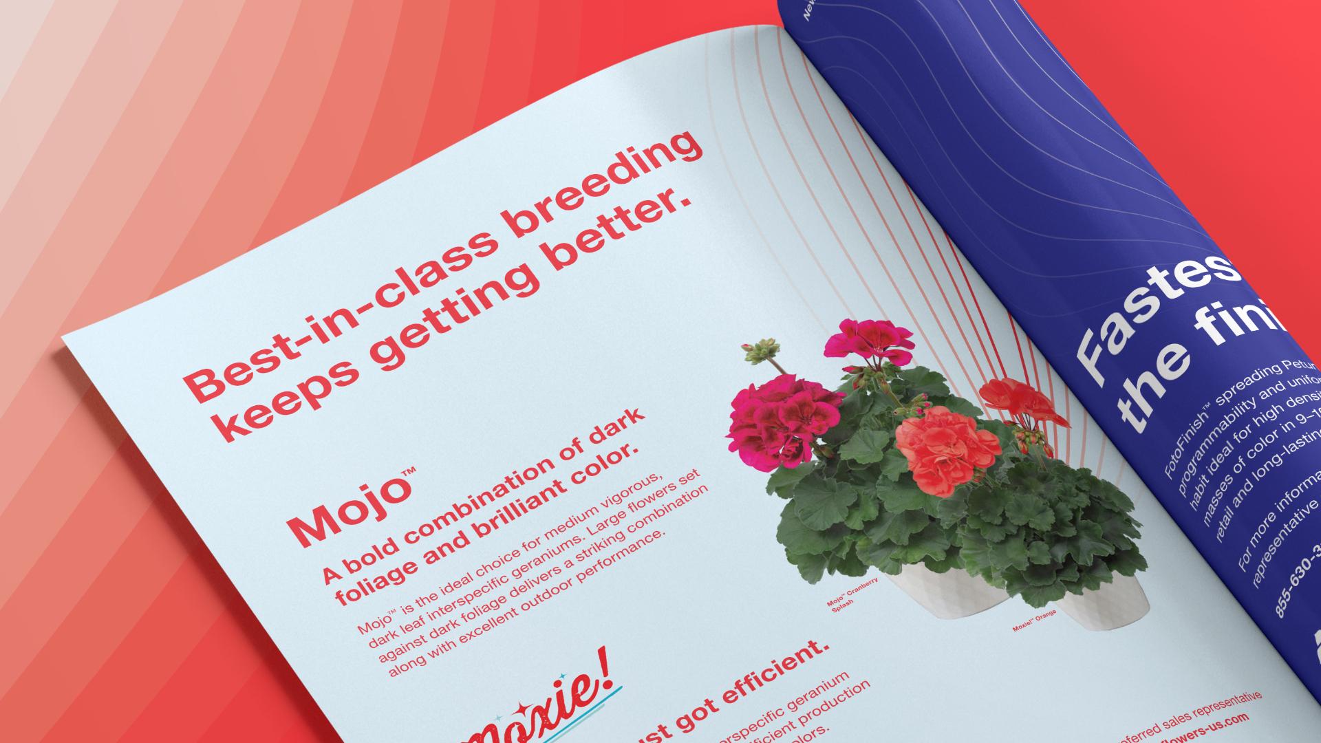 Syngenta Flowers geranium magazine ad