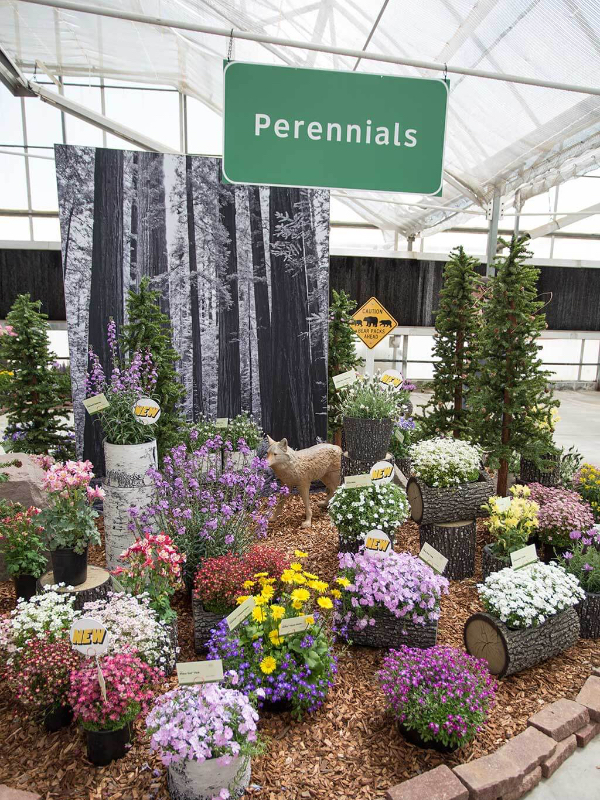 Cast 2018 Perennials display close up