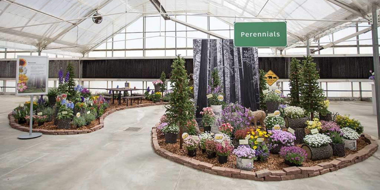 Cast 2018 perennials display
