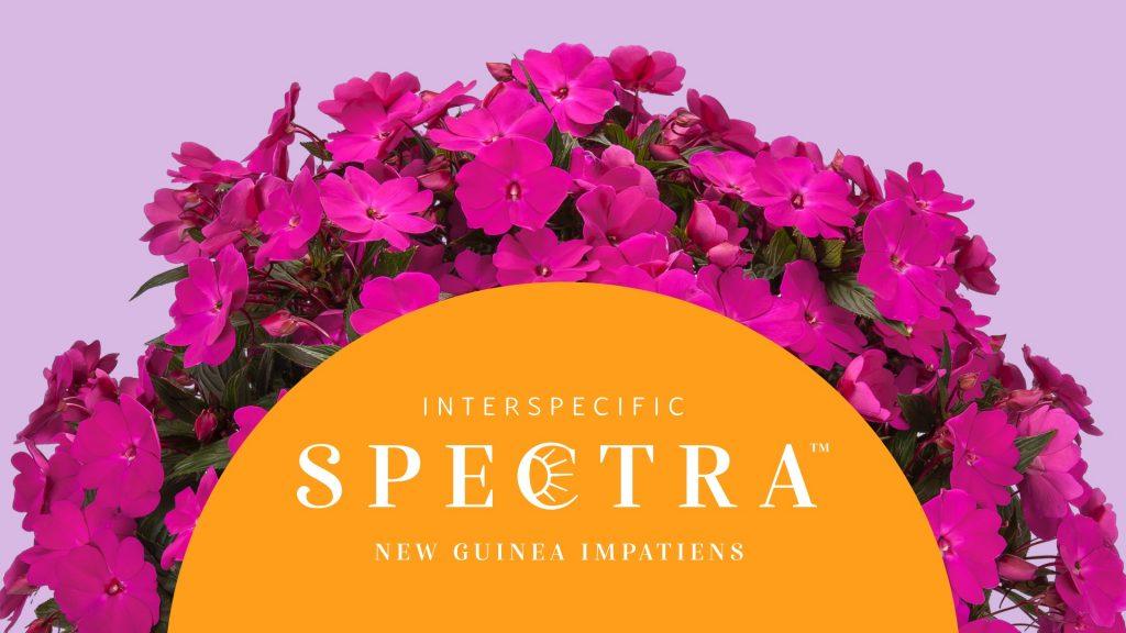 spectra portfolio thumbnail