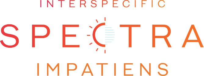 spectra logo development option one