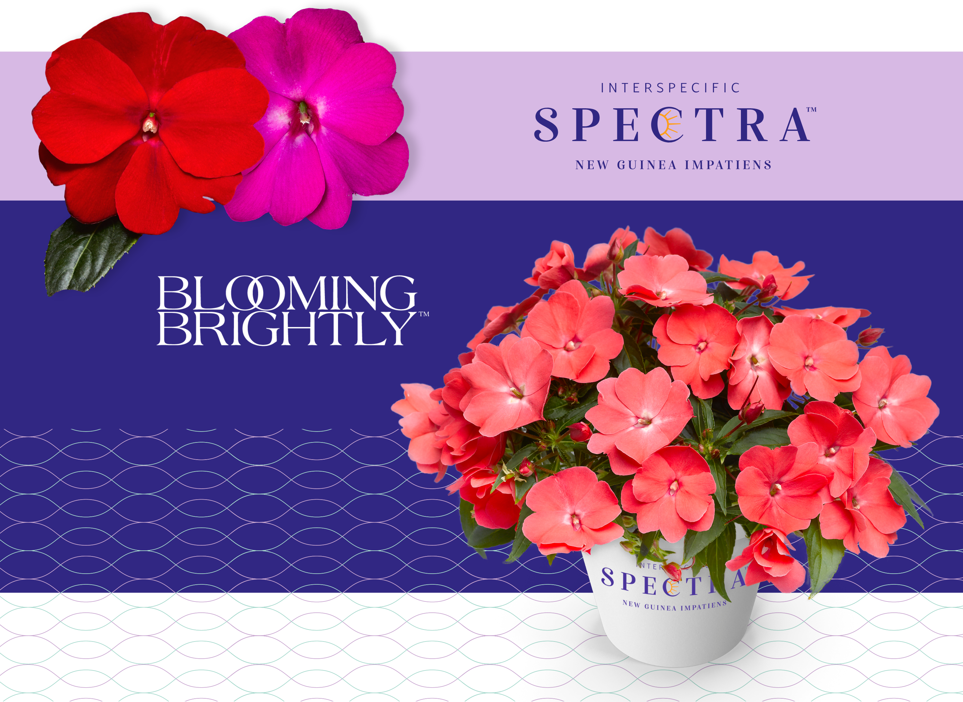 spectra product images with branding
